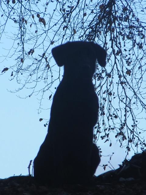 Der Hund der Autorin Shirley Michaela Seul heißt Miss Lomax und führt einen Hundeblog unter www.flipper-privat.de