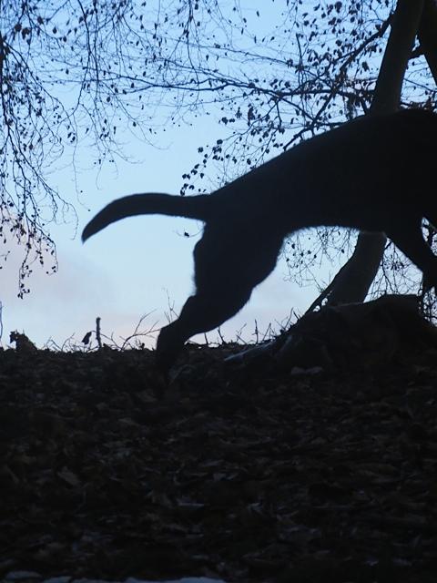 Der Hund der Schriftstellerin Michaela Seul verirrt sich nie und findet immer zurück auf seinen Blog www.flipper-privat.de