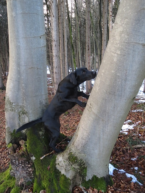 Der Hund der Autorin Michaela Seul, der auch einen Hundeblog führt unter www.flipper-privat de klettert auf einen Baum