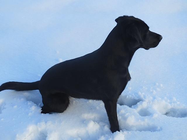 Mutterseelenallein, Frauchenallein ist Miss Lomax, Labrador der Autorin Michaela Seul, in der Eiswüste und weit und breit kein Blog www.flipper-privat.de