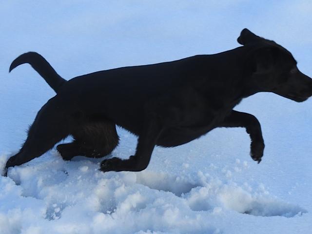 Michaela Seuls Hund Miss Lomax rennt durch den Schnee und ihren Blog www.flipper-privat.de