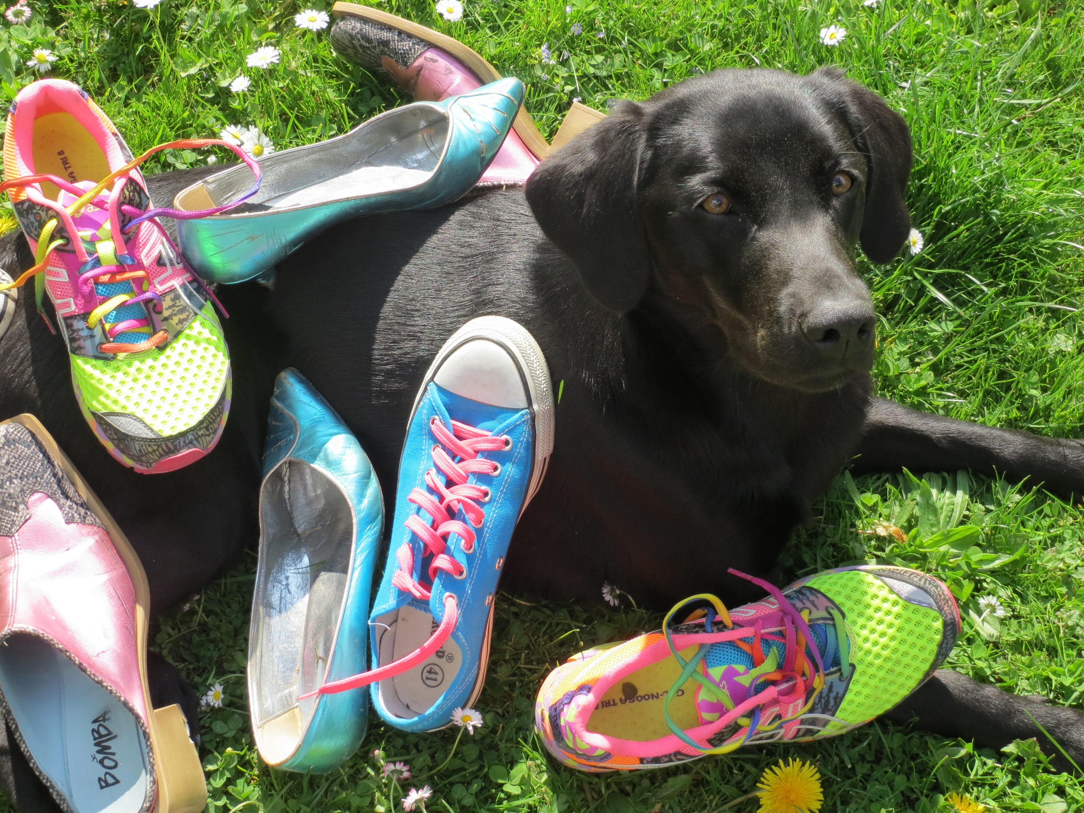 Miss Lomax, die Bloggerin unter www.flipper-privat.de hat ihre eigene Meinung zur Hunderziehung ihres Frauchens, der Autorin Michaela Seul