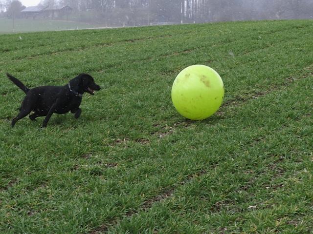Miss Lomax von www.flipper-privat.de jagt einen gelben Ball