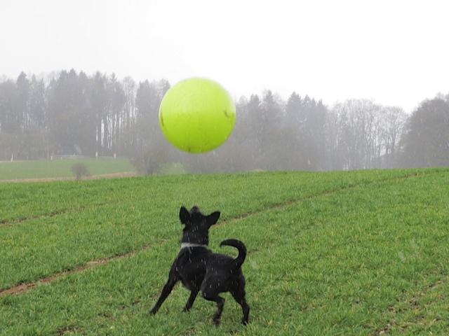 Eine Sonne fällt vom Himmel und Miss Lomax, ein schwarzer Labrador von www.flipper-privat.de fängt ihn für die Schriftstellerin Michaela Seul