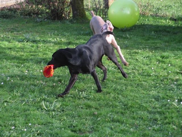 Ein außerirdischer Hund verfolgt Miss Lomax, die Muse der Autorin Shirley Michaela Seul, die unter www.flipper-privat.de bloggt