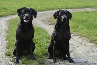 Zwei Hunde, von denen einer bloggt, nämlich Miss Lomax unter www.flipper-privat.de von der Autorin Seul