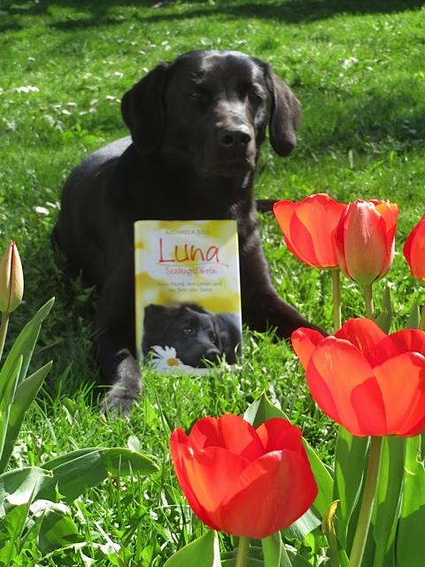 Luna Seelengefährtin ist ein Buch von Michaela Seul und ihr Hund Miss Lomax ist auf dem Cover bei www.flipper-privat.de