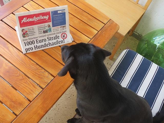Hundehaufen werden bestraft. Labrador Miss Lomax, der unter www.flipper-privat.de einen Hundeblog führt, ist fassungslos