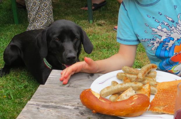 Der Hund Miss Lomax der Autorin Seul vor einem Grillteller