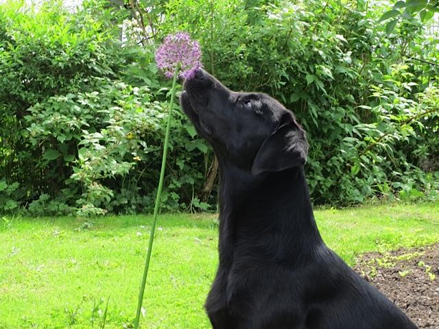 Hund besteht Heuschnupfentest auf www.flipper-privat.de