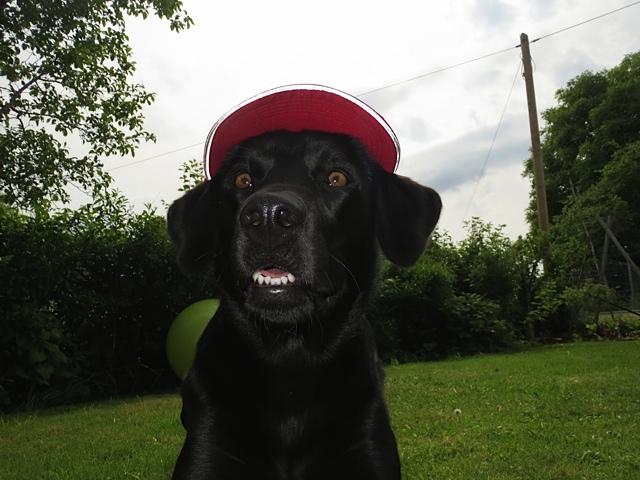 Weil ich der Hund einer Krimiautorin bin, ist mein Heiligenschein rot. Blutrot!