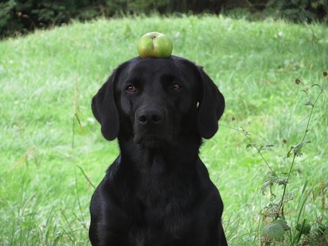 Miss Lomax ist mutig wie es sich für den Hund einer Krimiautorin gehört!