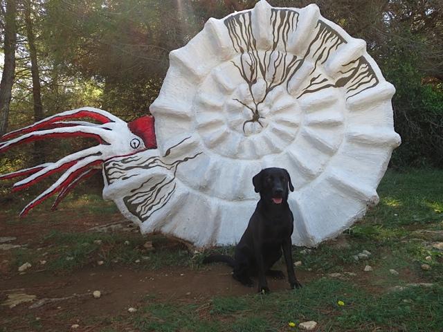 Miss Lomax vom Hundeblog von Shirley Michaela Seul bei www.flipper-privat.de