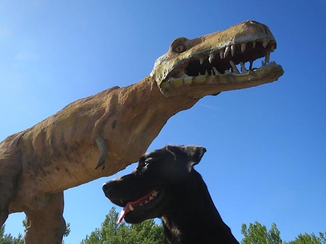 Dritte Zähne oder vierte, fragt sich Miss Lomax auf dem Hundeblog www.flipper-privat.de von Shirley Michaela Seul