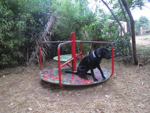 Hund im Karussell auf www.flipper-privat.de dem Hundeblog der Autorin Shirley Michaela Seul