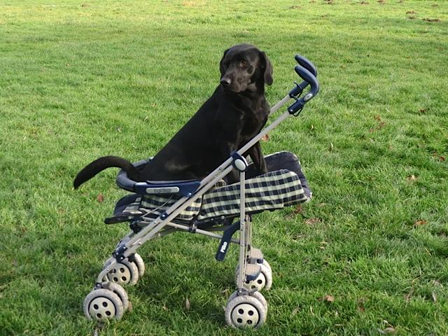 Wer seinen Hund liebt, der schiebt. www.flipper-privat.de