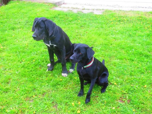 Dogge und Labrador auf www.flipper-privat.de