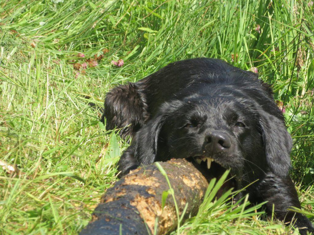 Das ist mein Stock, klar? www.flipper-privat.de