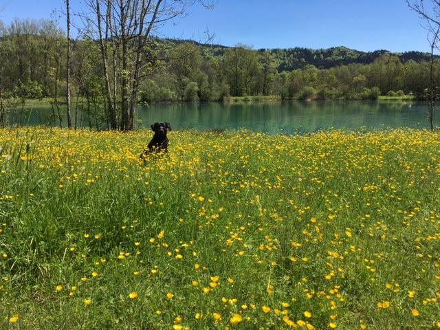 Gelbe Blumen auf Hundeblog von Shirley-Michaela-Seul.de