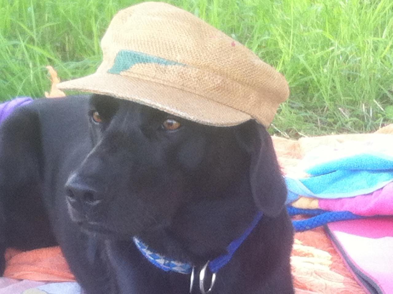 Hund mit Kappe auf https://shirley-michaela-seul.de