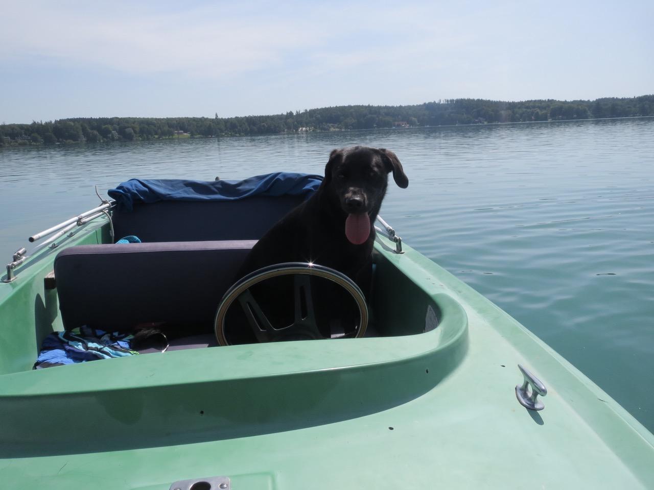 Hund am Steuer auf https://shirley-michaela-seul.de