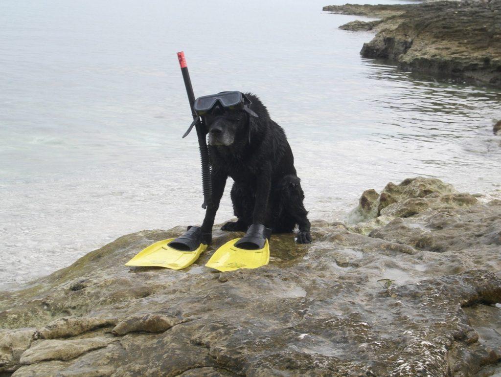 Hund mit Raucherbrille auf https://Shirley-Michaela-Seul.de