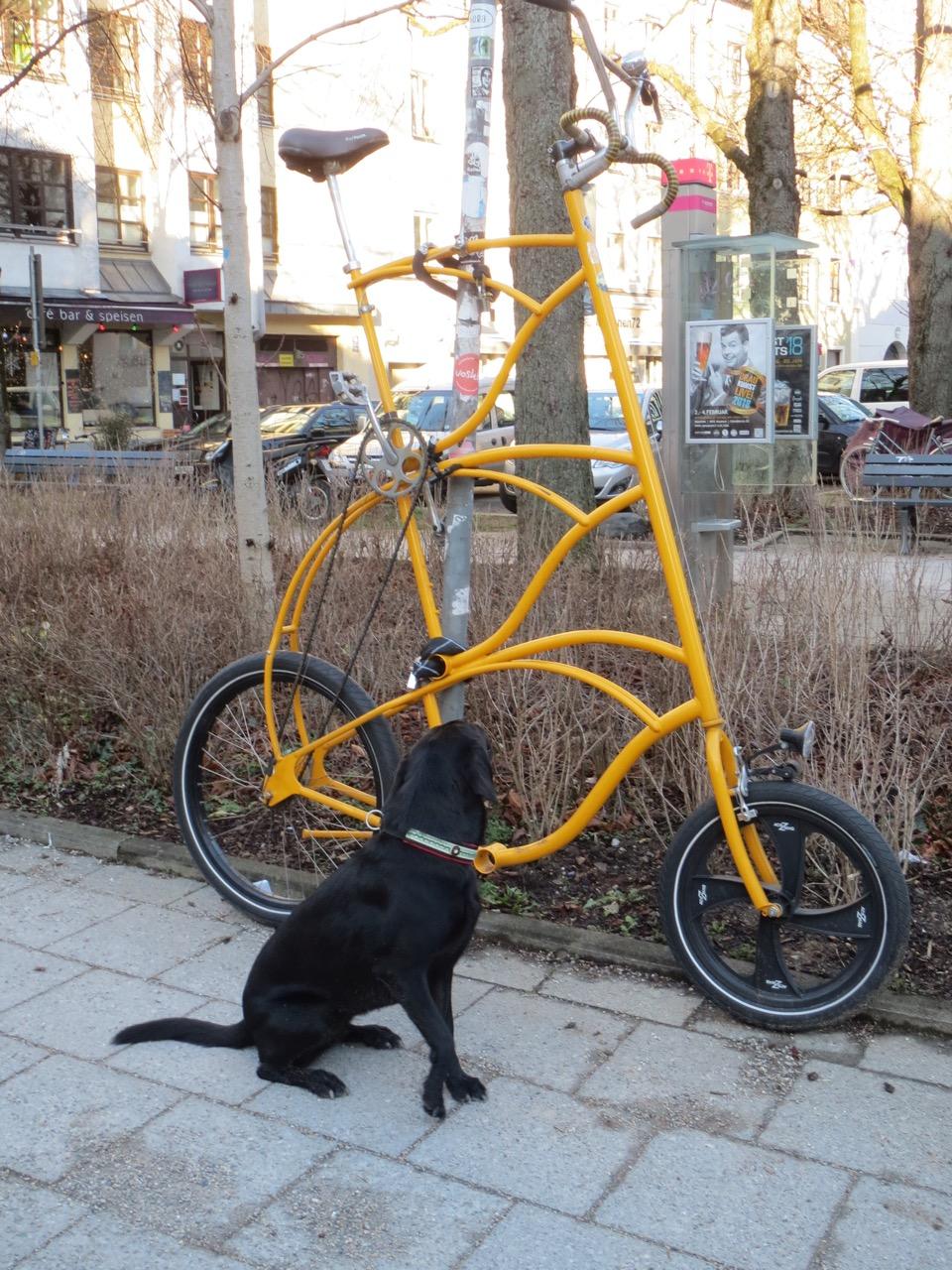 Hund mit Hochrad auf www.flipper-privat.de