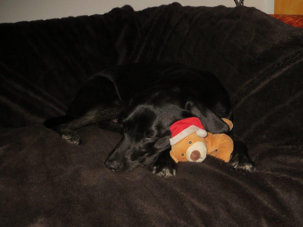 Hund mit Nikolaus auf www.flipper-privat.de
