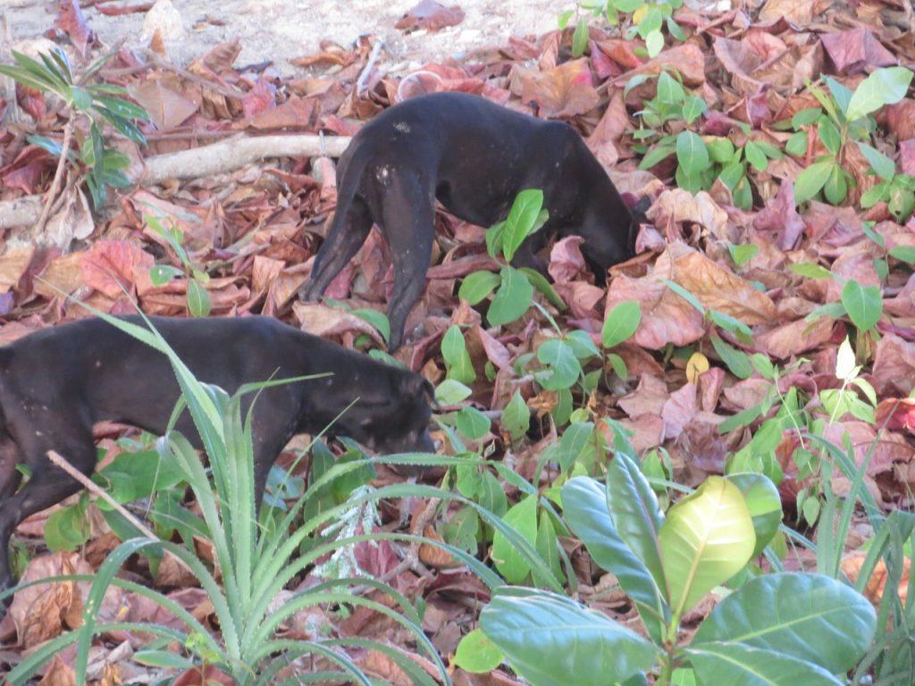 Hund in Thailand auf Shirley-Michaela-Seul.de