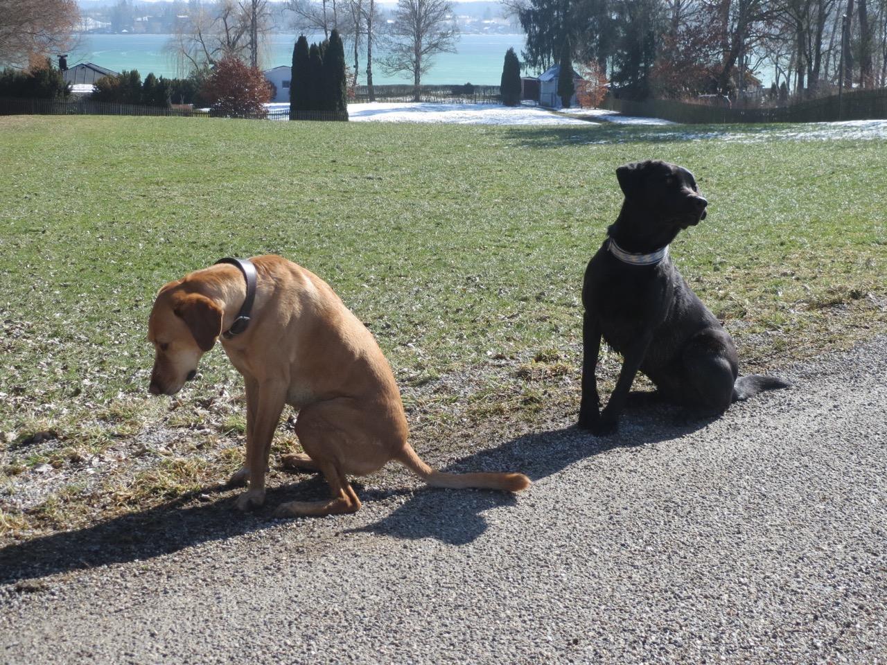 Hunde am See und Seehunde auf flippet-privat.de