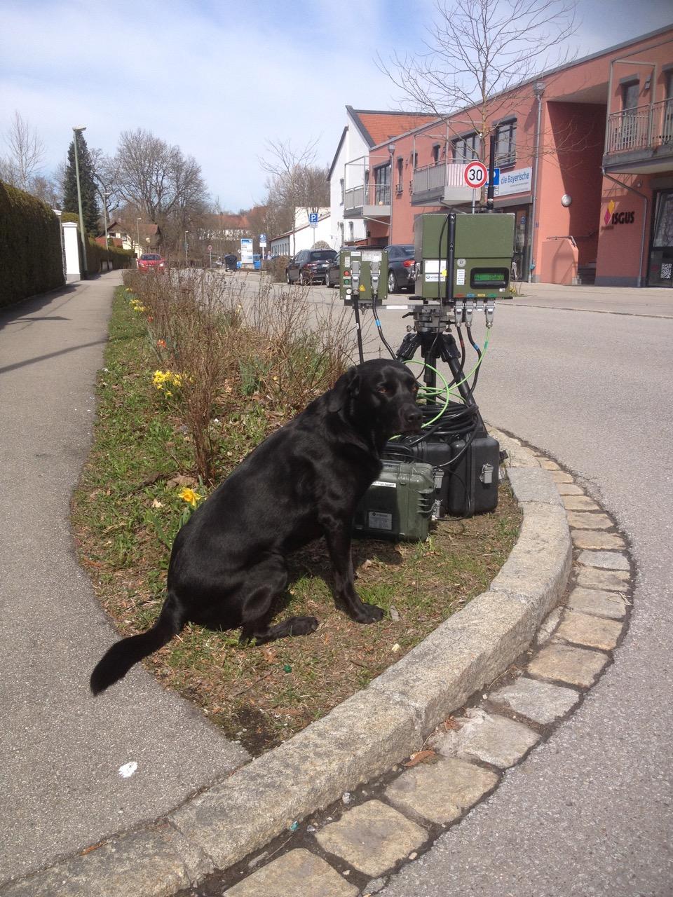Hund in Radarkontrolle auf www.flipper-privat.de