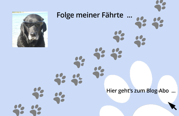 Blog-Abo so geht's - Hundeblog Shirley Michaela Seul