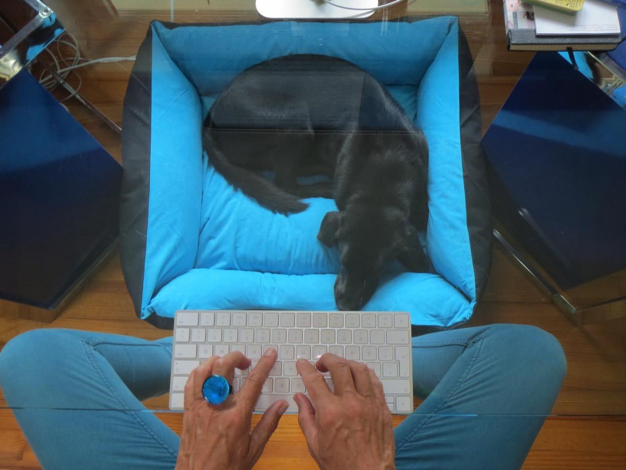 Schlafende Hunde auf www.flipper-privat.de