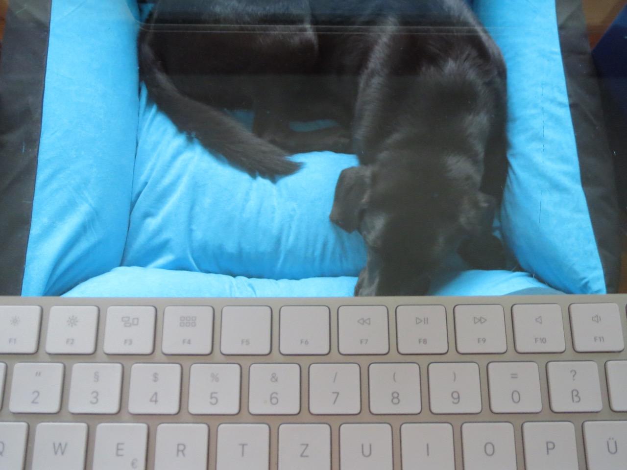 Musen auf www.flipper-privat.de