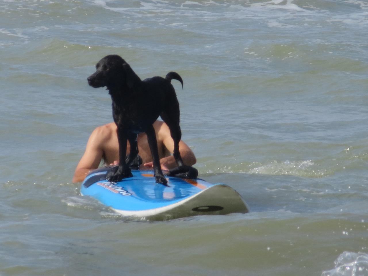 Surfender Hund auf www.Shirley-Michaela-Seul.de