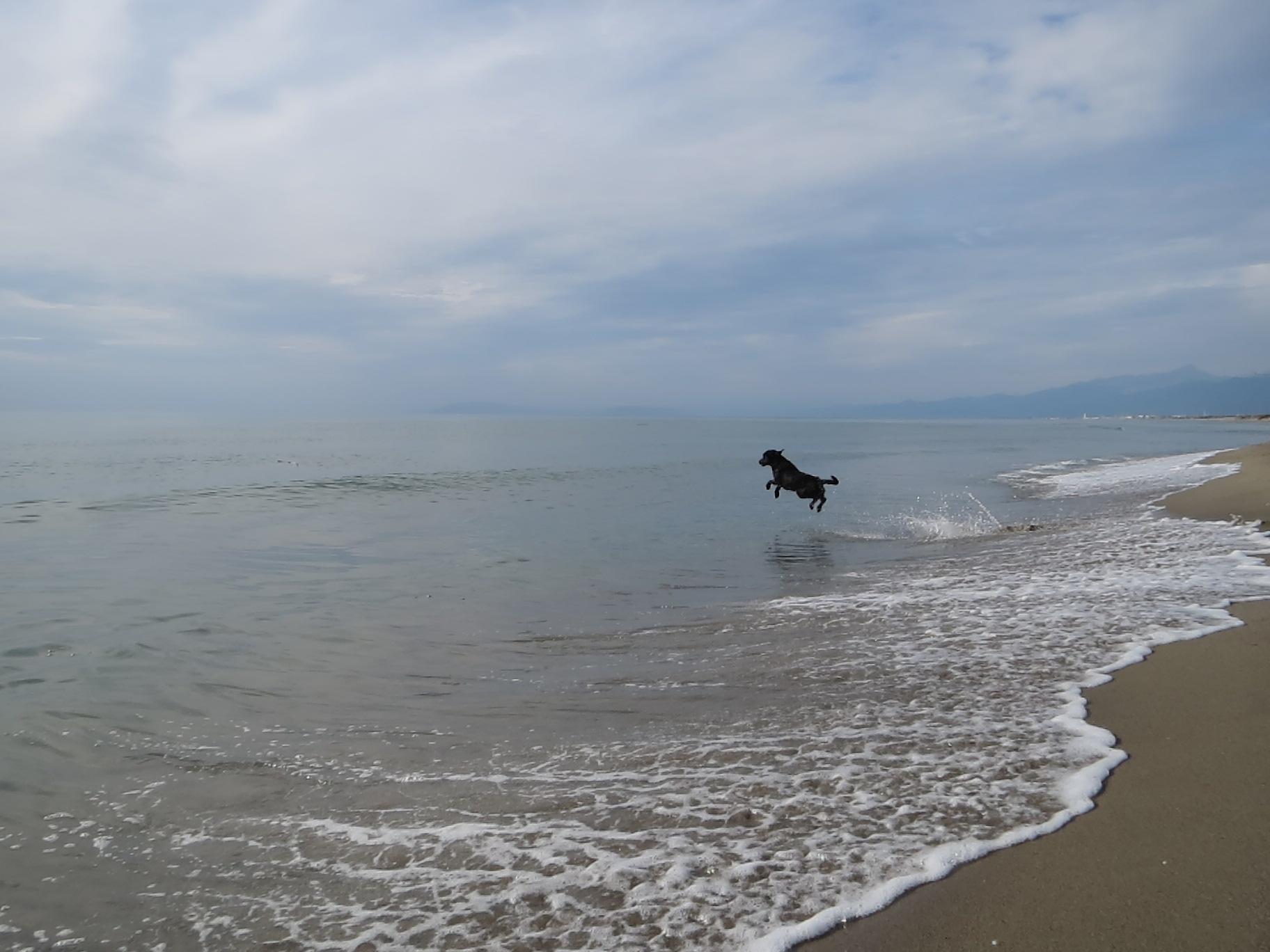 Fliegender Hund auf www.flipper-privat.de