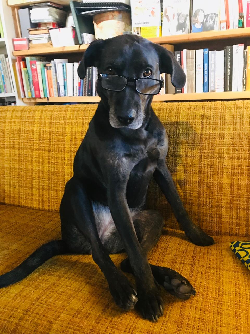 Hund mit Brille auf Hundeblog www.flipper-privat.de