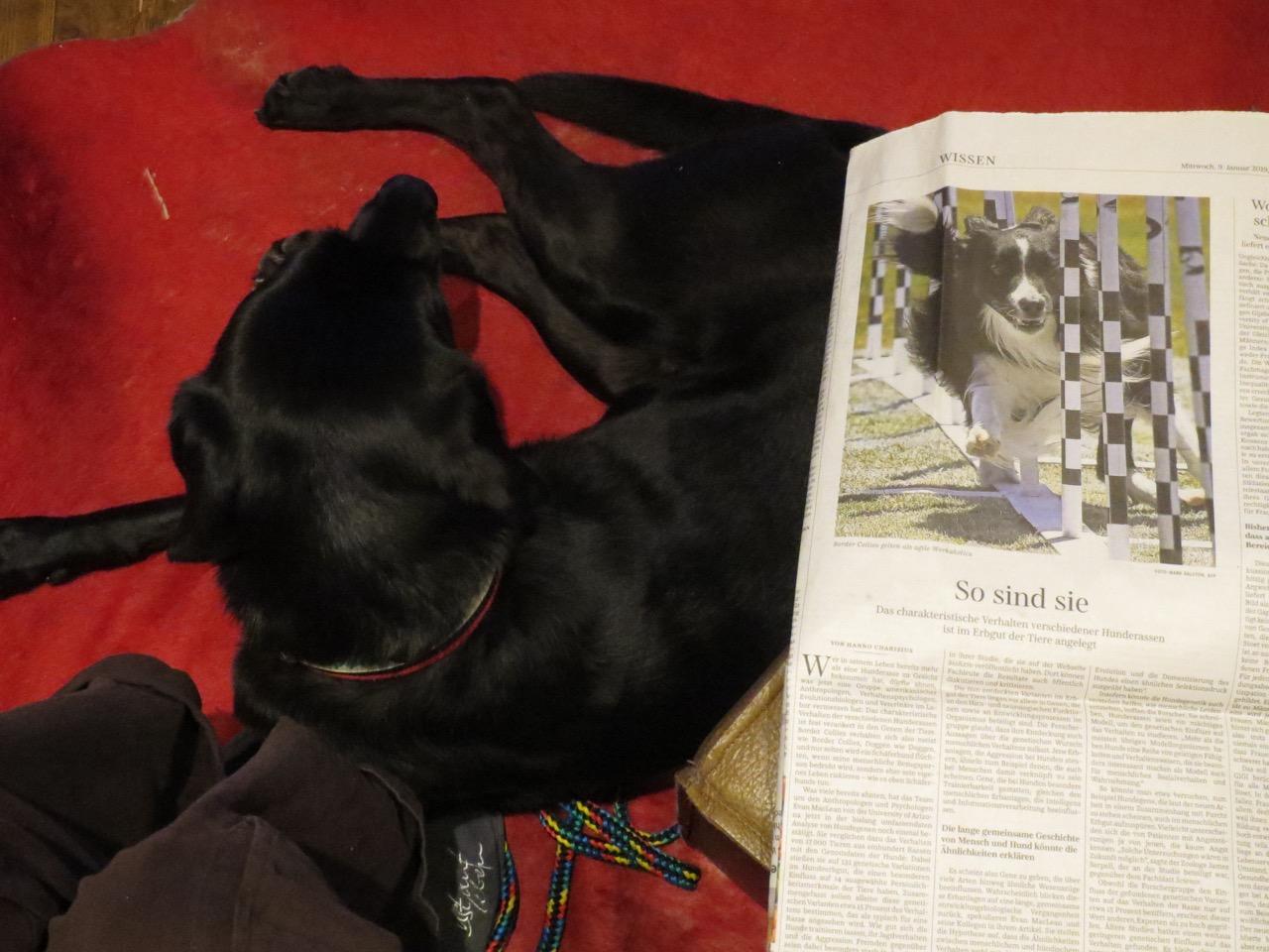 Der Hundeblog von shirley-michaela-seul.de