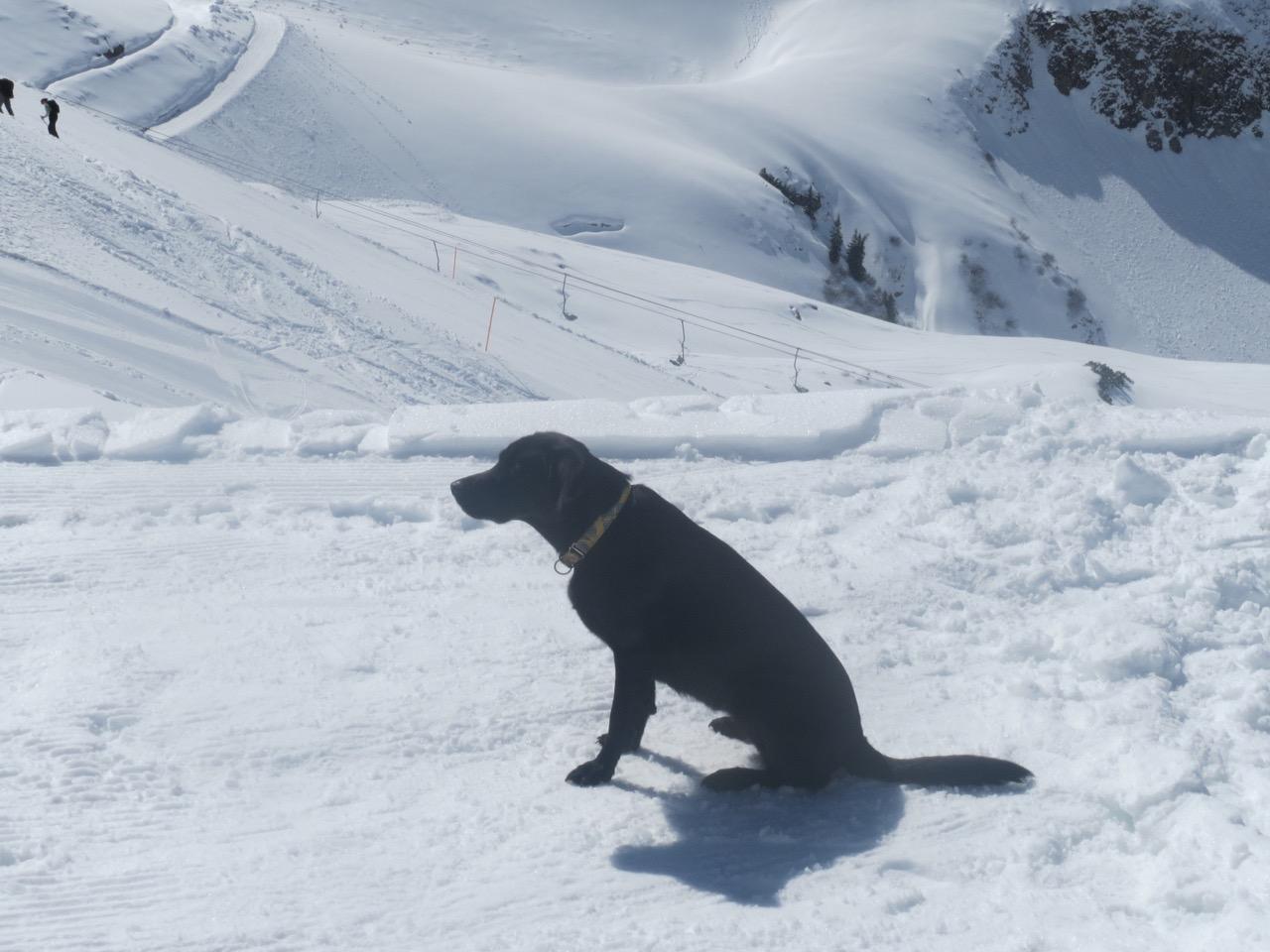 Hund muss Skifahren auf www.flipper-privat.de