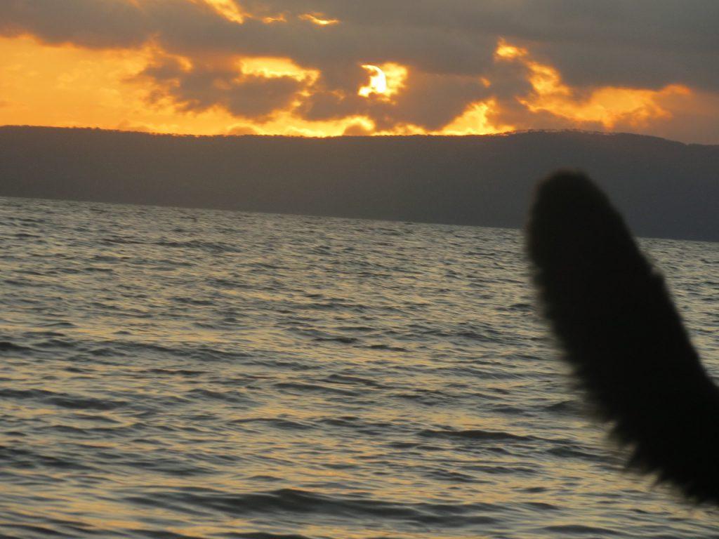 Ein Schwanz im Sonnenuntergang