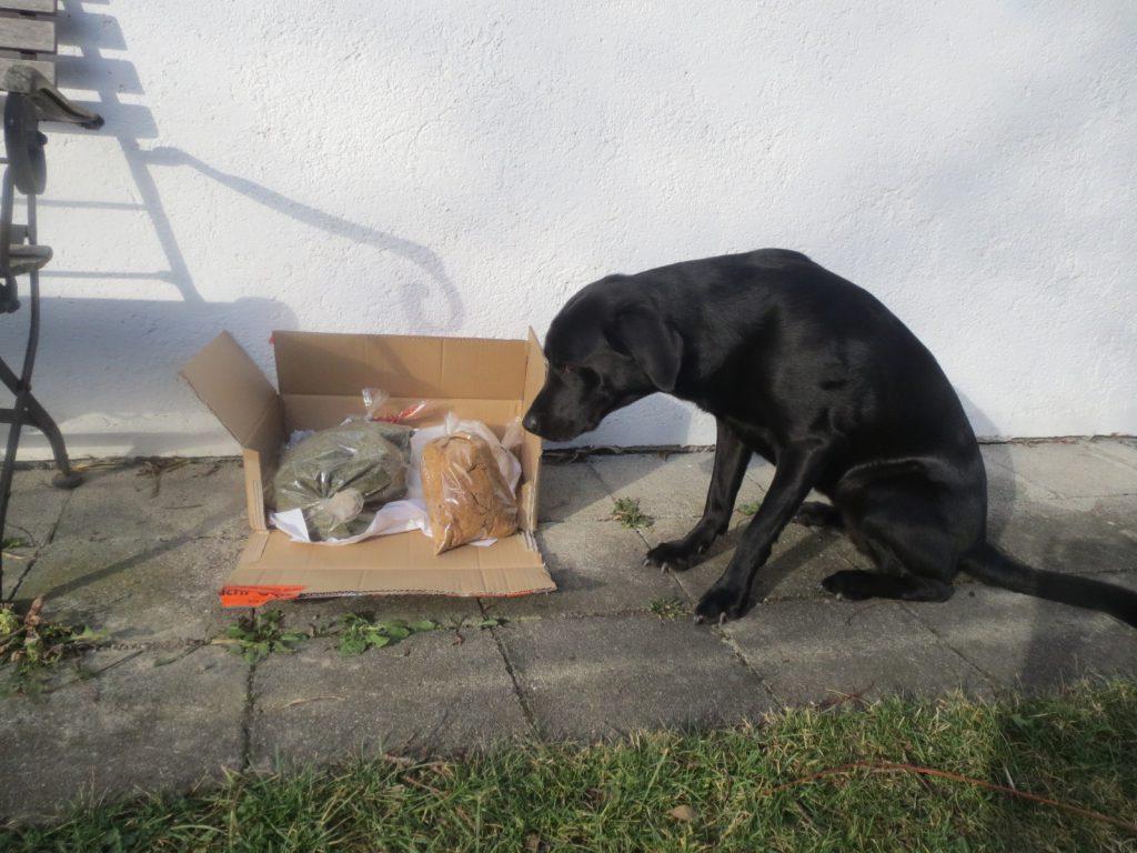 Drogenhund auf www.flipper-privat.de