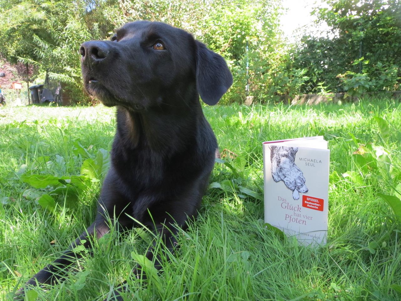 Buch für Hundefreunde auf www.flipper-privat.de
